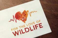 FOR THE LOVE OF WILDLIFE | Logo Refresh