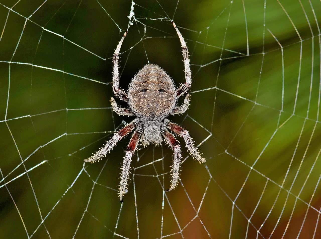Photo of Phobia kya hai? फोबिया के लक्षण और सभी फोबिया की A-Z लिस्ट