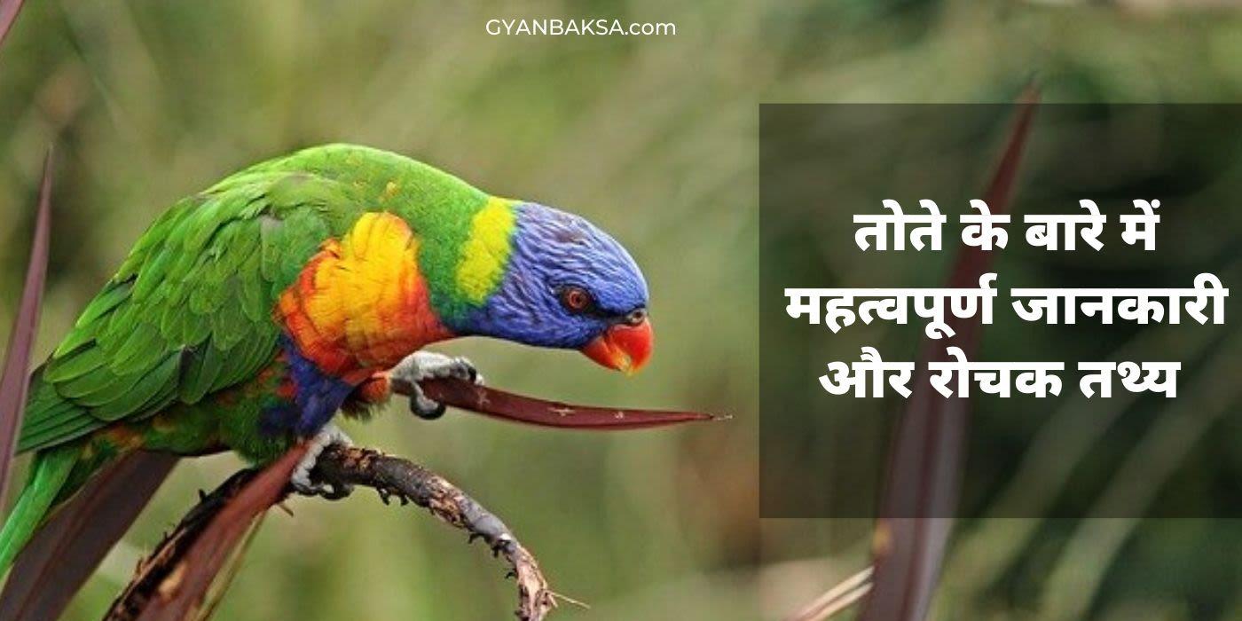 Photo of तोते के बारे में महत्वपूर्ण जानकारी और 11 रोचक तथ्य | Parrot in Hindi