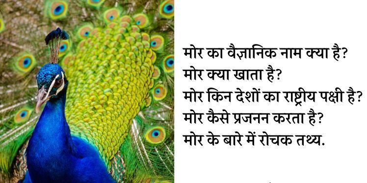Photo of मोर से जुड़े 31 रोचक तथ्य, महत्वपूर्ण जानकारी | Peacock in hindi