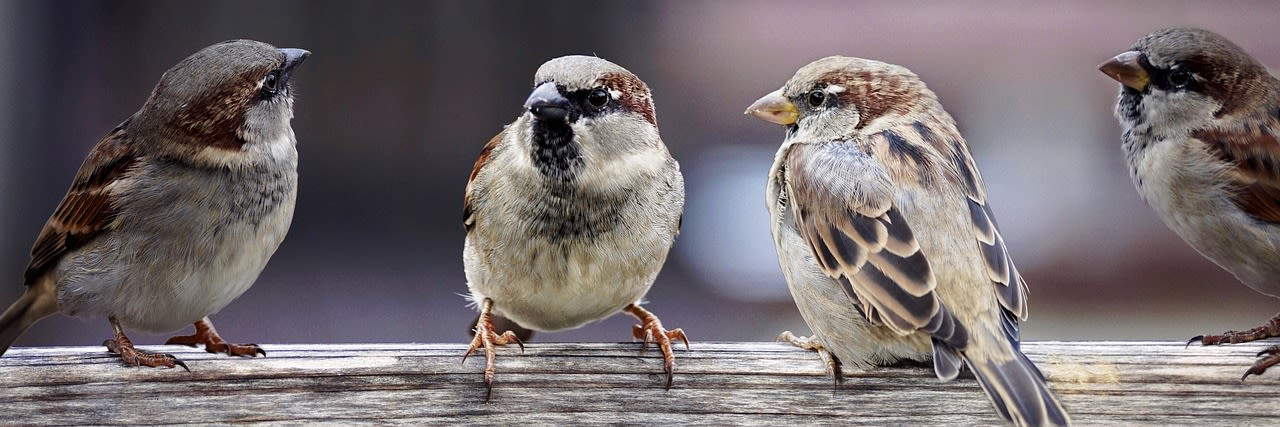 Sparrow Facts in Hindi