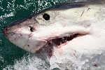 Shark attack horror as mother's arm...