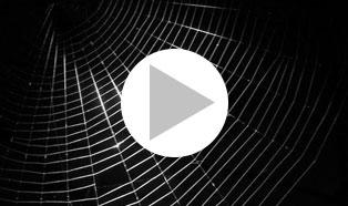 Dark web blind2 zvkfna