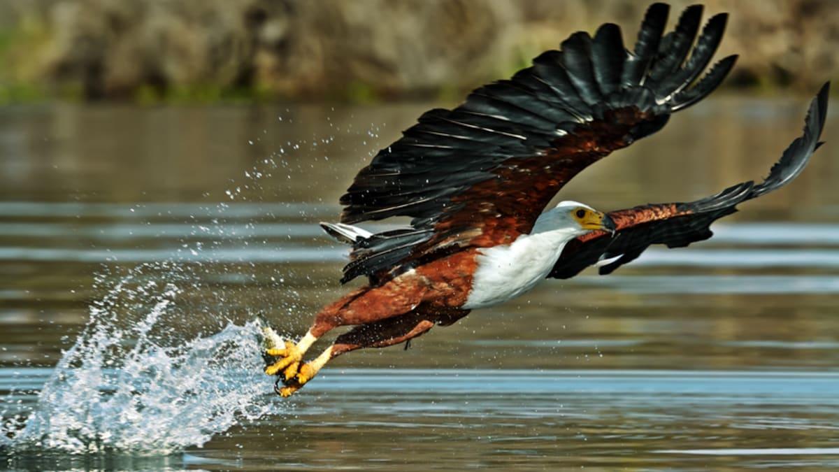 Pakej Percutian ke Lake Naivasha Bersama Tripfez