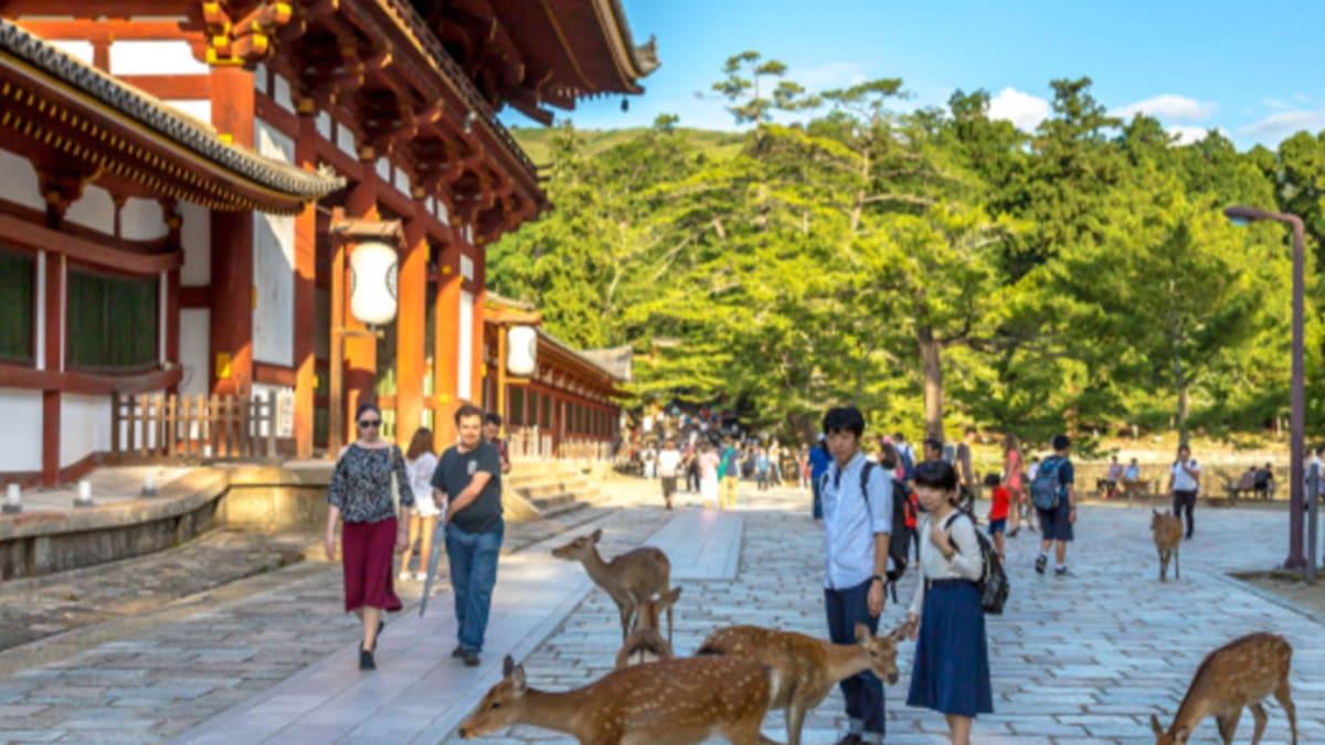 Pakej Percutian ke Nara Bersama Tripfez