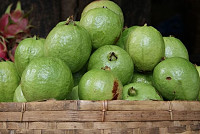 Incredible benefits of guava for health