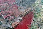 South Korea Stops Stream of Blood...