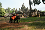 Elephants in Angkor need to live in...