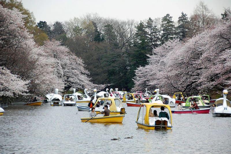 inokashira-park-pond