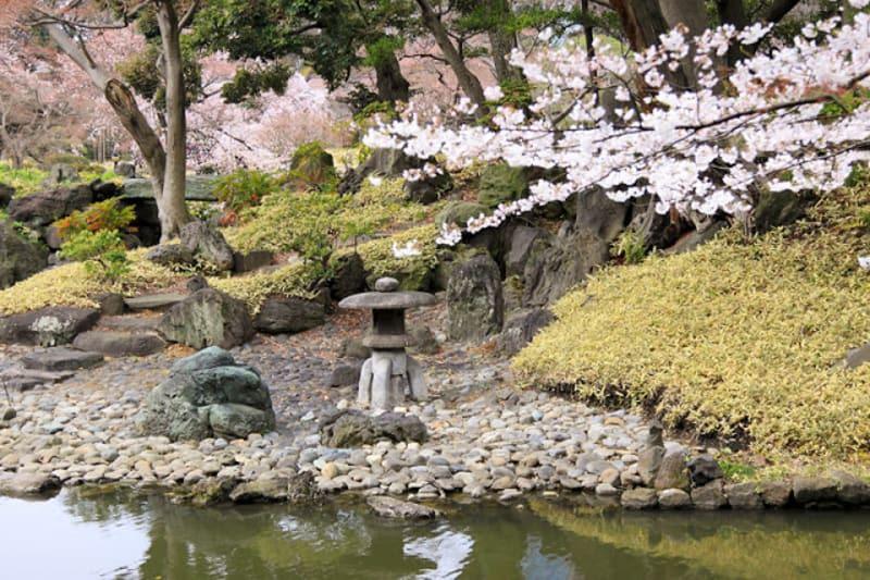 Sakura koishikawa
