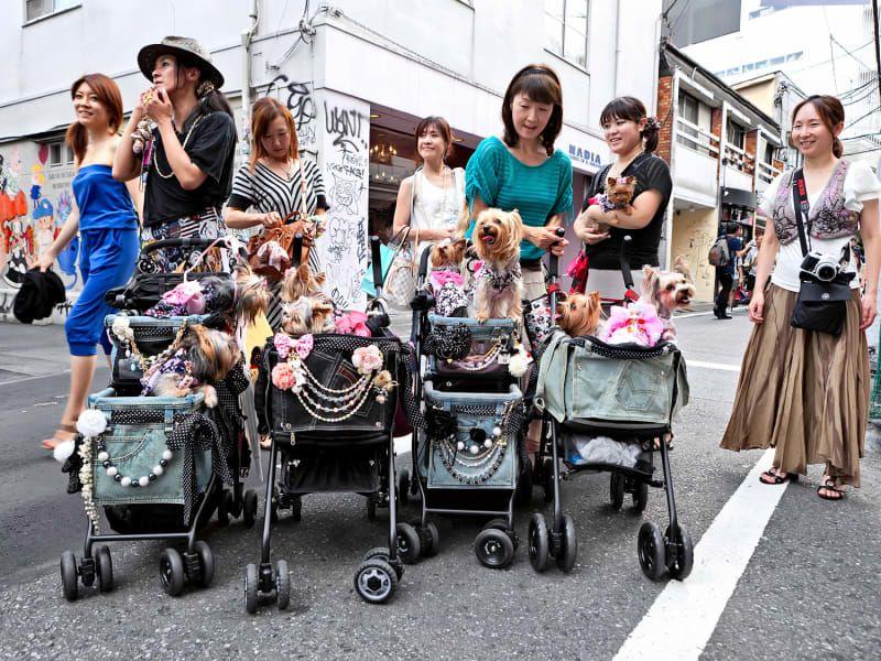 japan_dog_strollers1