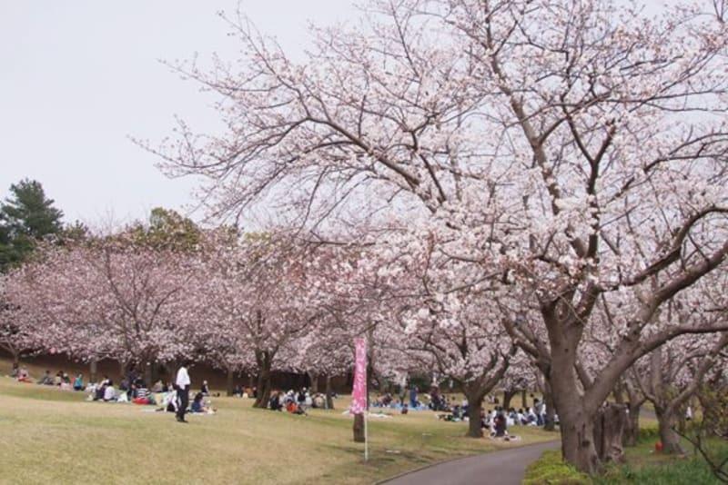 Yoshino Park Kagoshima