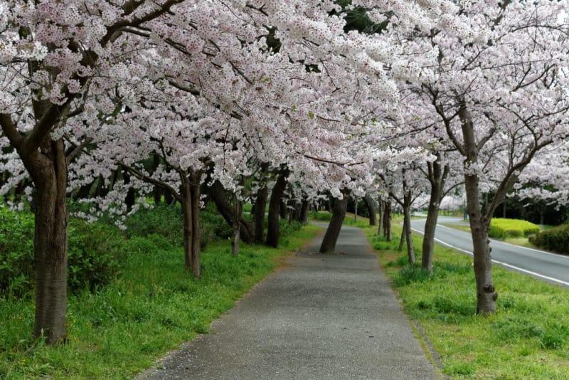 Uminonakamichi Seaside Park 4/3