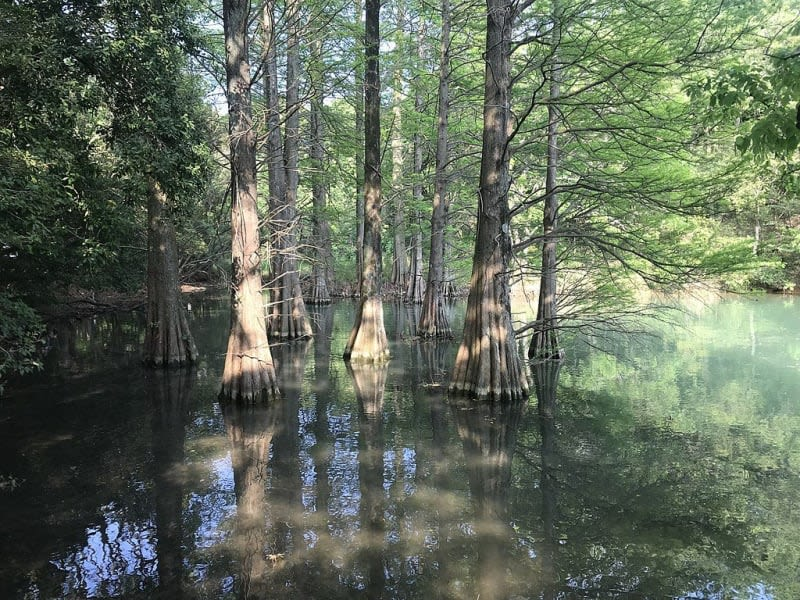 sasaguri-kyudai-forest
