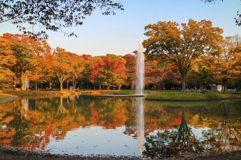 autumn Japanese park.Evening twilight is so beautiful.