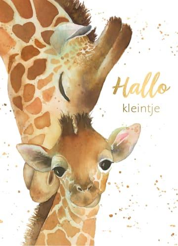 - geboorte-hallo-kleintje-giraffe