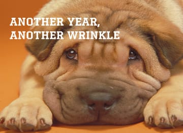 - animal-fiesta-another-year-another-wrinkle