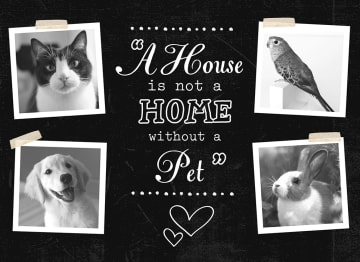 - dieren-huisdier-hart