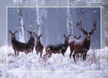 - herten-in-de-sneeuw-kaart