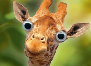 - animal-fiesta-een-giraffe-met-grote-ogen