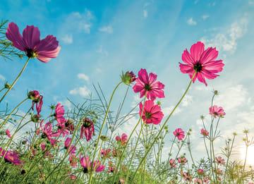 - roze-bloemen-tegen-een-blauwe-lucht