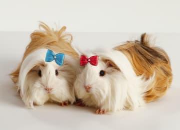 - hamsters-met-strikjes