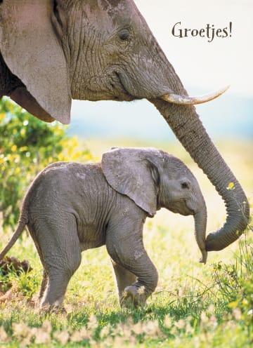 - baby-olifant