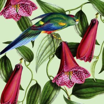 - CLA-papegaai-bij-bloemen