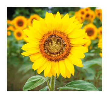 - Beterschapskaart-zonnebloem-met-smiley-Polaroid