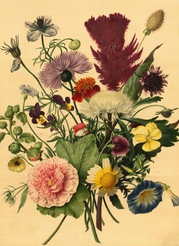 - bloemen-rijksmuseum