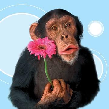 - dierendag-aap-met-bloem