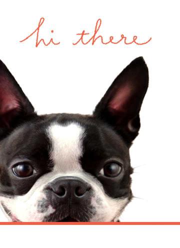 - hond-zegt-hi-there
