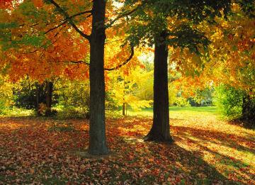- een-zonnige-namiddag-in-de-herfst