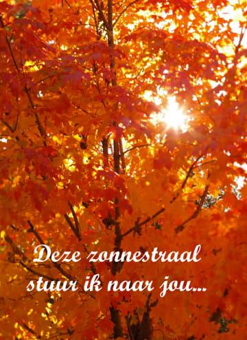 - Boom-in-herfst