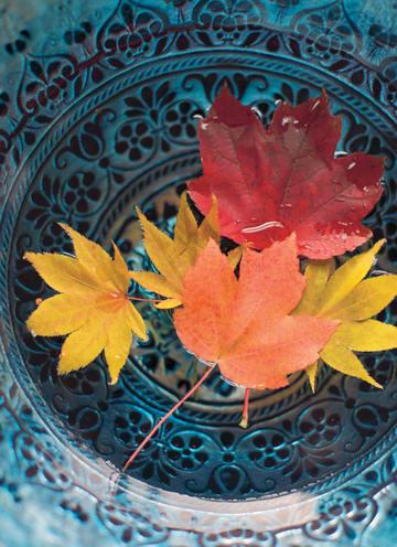 - herfst-kaart-herfstbladeren