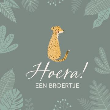 - geboorte-broer-cheetah-hoera-een-broertje