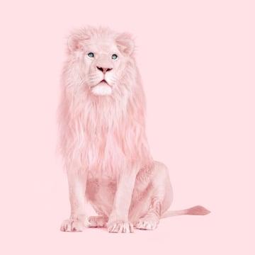 - leeuw-roze
