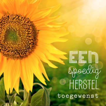 - zonnebloemen-spoedig-herstel