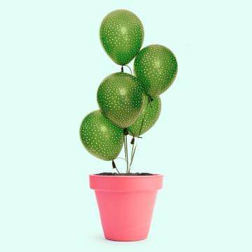 - plant-met-ballonnen