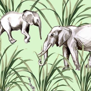 - CLA-2-olifanten