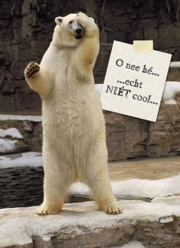 - verwarde-ijsbeer