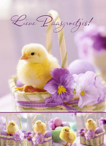 - Kuiken-in-mandje-met-viooltje-lieve-paasgroetjes
