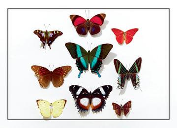 - 9-vlinders