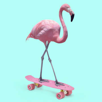 - flamingo-op-skateboard