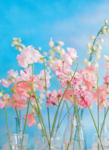 - bloemen-lucht-