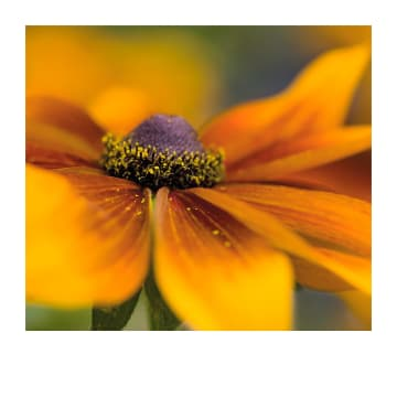 - Sterkte-kaart-gele-bloem-Polaroid
