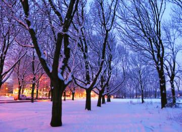 - besneeuwde-bomen-schemer
