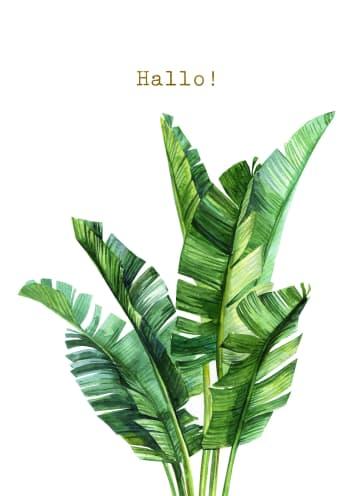 - hello-palm