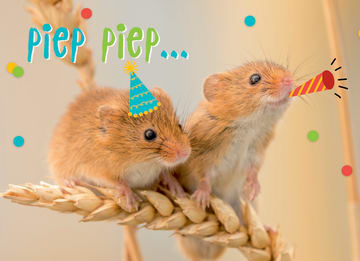 - animal-fiesta-piep-piep