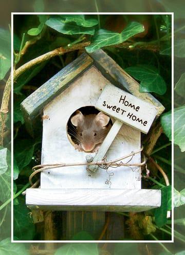 - Verhuisd-muis-huisje
